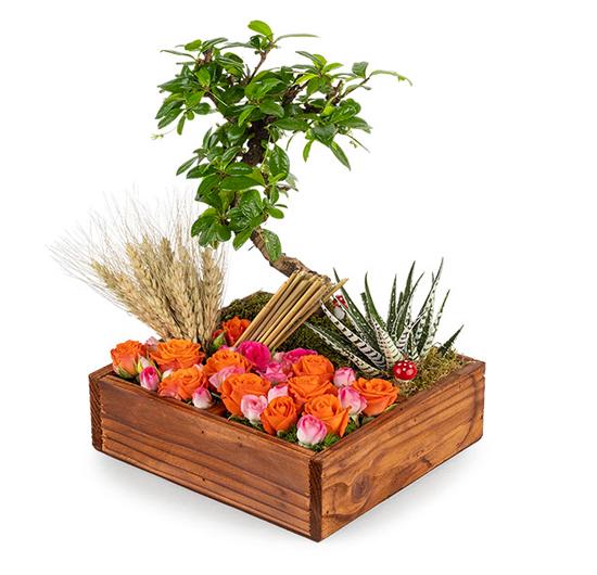 Butik Bonsai Ve Renkli Çiçekler