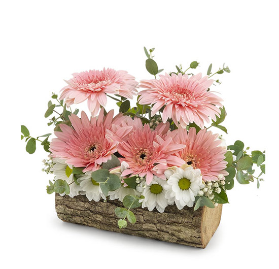 Asiste Kütükte Kır Çiçekleri
