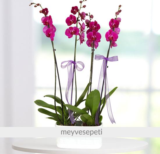 Derin Duygular 4 Dal Mor Orkide