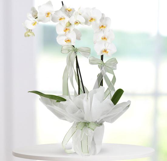 Zarafetin Simgesi 2 Dal Beyaz Orkide